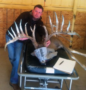 Deer Doctor - Veterinarian Joe Ables shows off the antlers of the sire of his deer-breeding herd. The whitetail deer the Decatur vet sees must be tranquilized, bound and hooded before receiving any treatment.