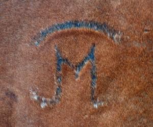 Horse Brand 08.07.12