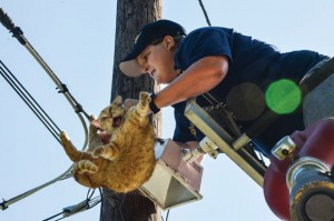 CATASTROPHE - Katy Wacasey, 23, a member of the Rhome Volunteer Fire Department, struggles to free a female cat that somehow got her leg stuck in a guide line high up a telephone pole Thursday morning in Boyd. Messenger photo by Joe Duty