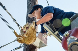 CATASTROPHE - Katy Wacasey, 23, a member of the Rhome Volunteer Fire Department, struggles to free a female cat that somehow got her leg stuck in a guide line high up a telephone pole in Boyd last August. Messenger photo by Joe Duty