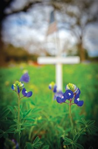 MOWED DOWN - A decision to mow the bluebonnets at Oaklawn Cemetery in Decatur caused a controversy in 2012. Messenger photo by Joe Duty
