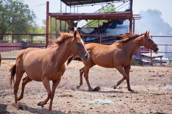 Hot Horses