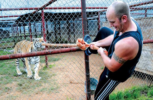 Tiger Strong