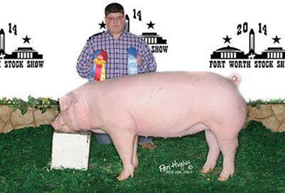 Breeding Gilt