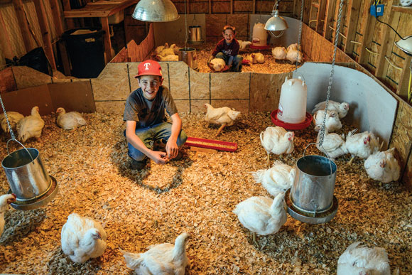 DAY AT THE OFFICE - Thaine and Cale Laaser get a dose of farm life as they raise chickens to show at Wise County Youth Fair. Messenger photo by Joe Duty